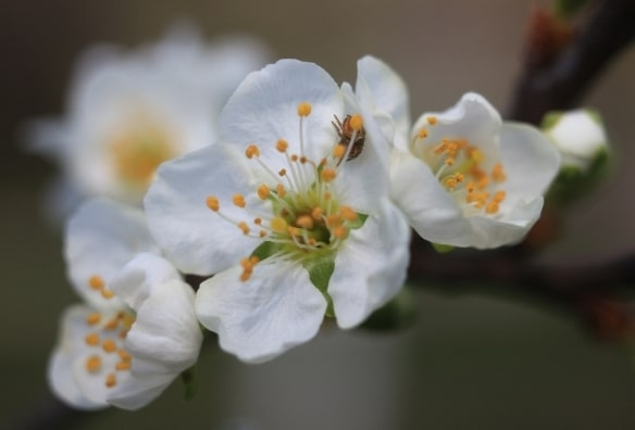 Verger botanique Heilbronn – voyage floral et gourmand